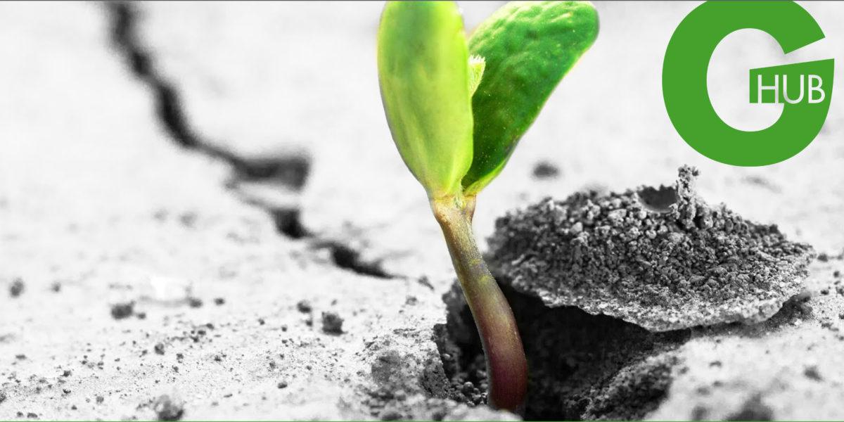Piantiamo il seme dell'Architettura che verra'